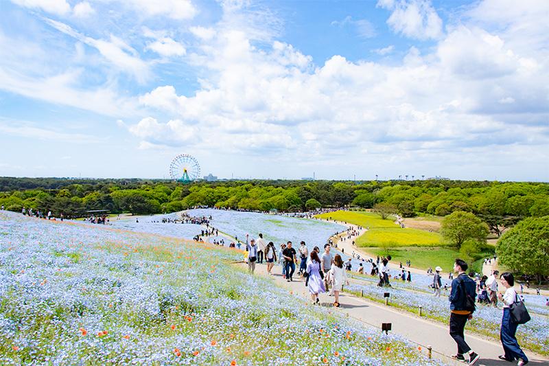 ひたち海浜公園03