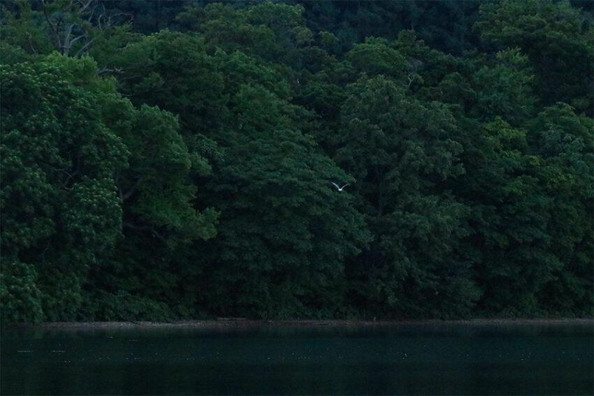 洞爺湖の森