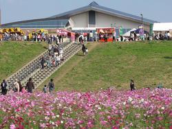 鴻巣コスモスフェスティバル01